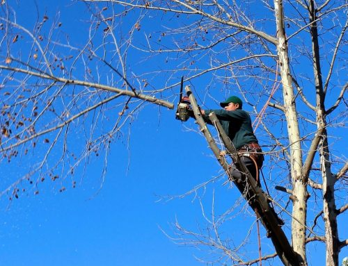 Reasons to Purchase a Brand New Chainsaw and How to Pick the Right One